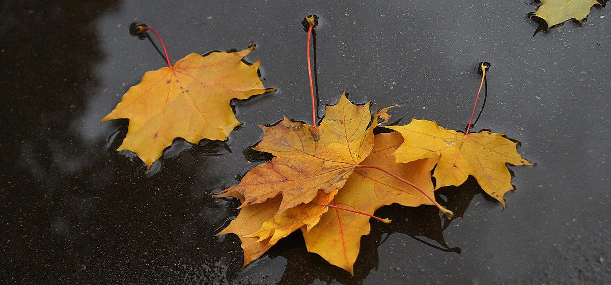 В Барановичах в выходные будет +9, пройдут кратковременные дожди