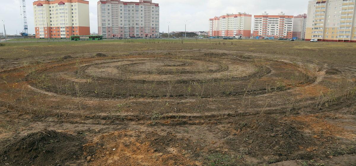 В Барановичском парке появится Зеленый лабиринт