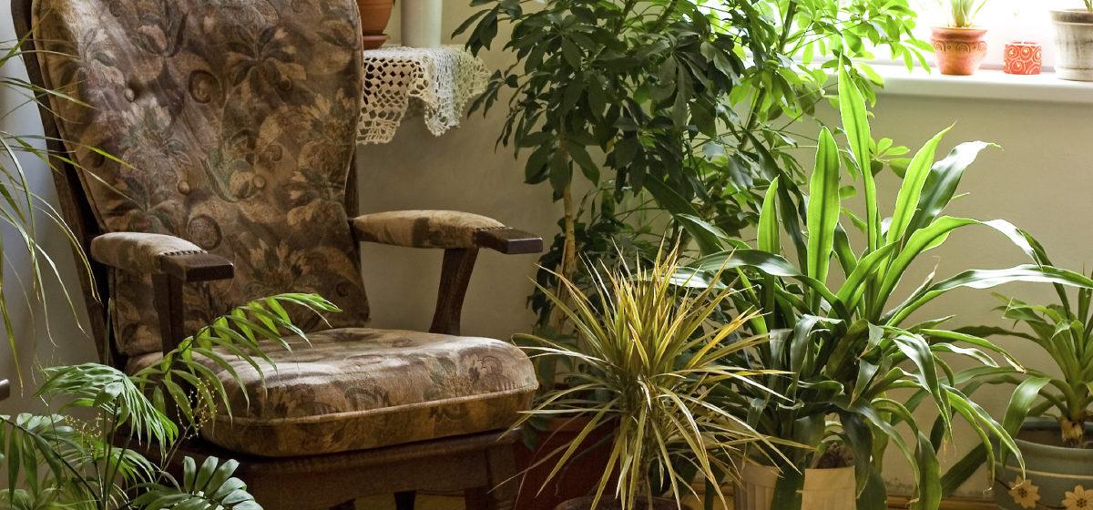 Популярные комнатные растения, которые могут навредить вашему здоровью