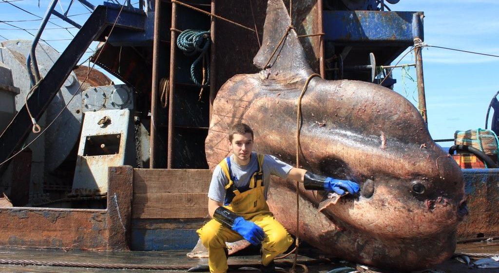 Мурманский моряк публикует фотографии очень, очень странных рыб, пойманных его траулером