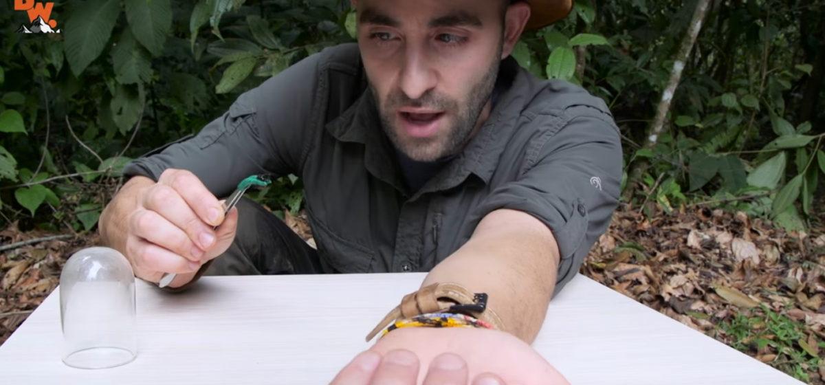 Исследователь снял на видео самый болезненный укус насекомого