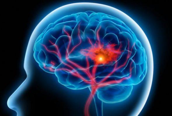 Ученые рассказали, как голод влияет на работу мозга