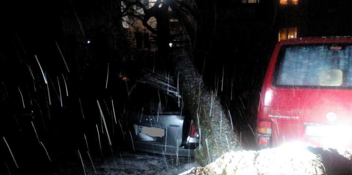 В Минске дерево упало сразу на четыре автомобиля