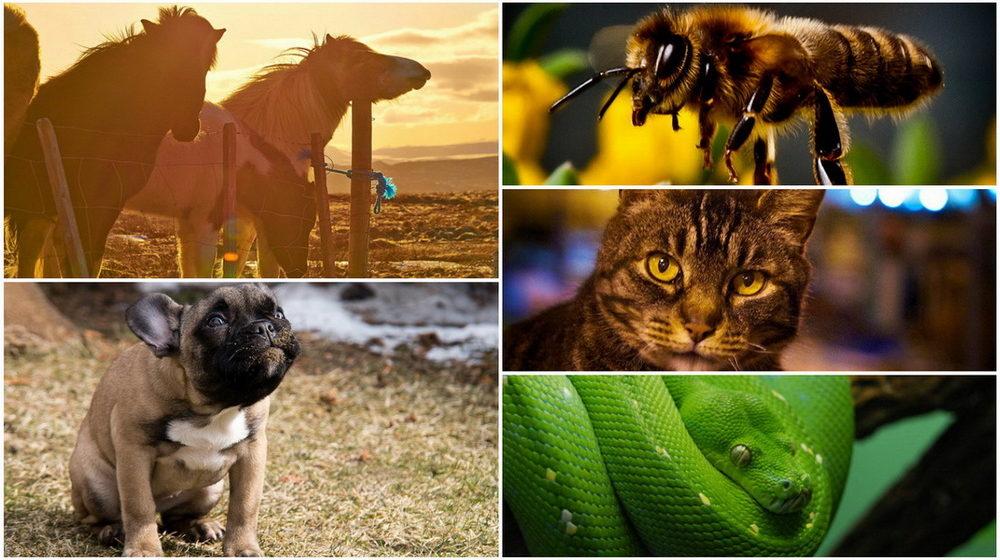 ТОП-5 животных, которые лечат людей
