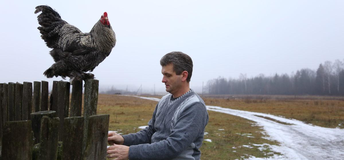 «Он любит свободу и червячков». Фоторепортаж с птичьего двора к Году Петуха
