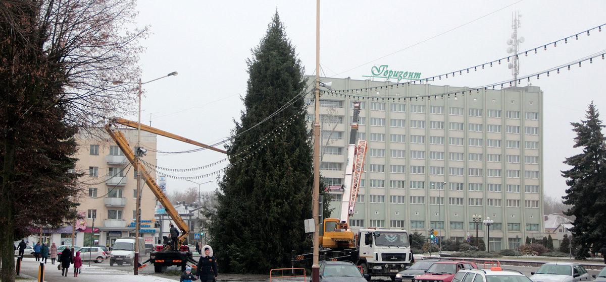 Фотофакт: В Барановичах на площади заканчивают устанавливать новогоднюю елку