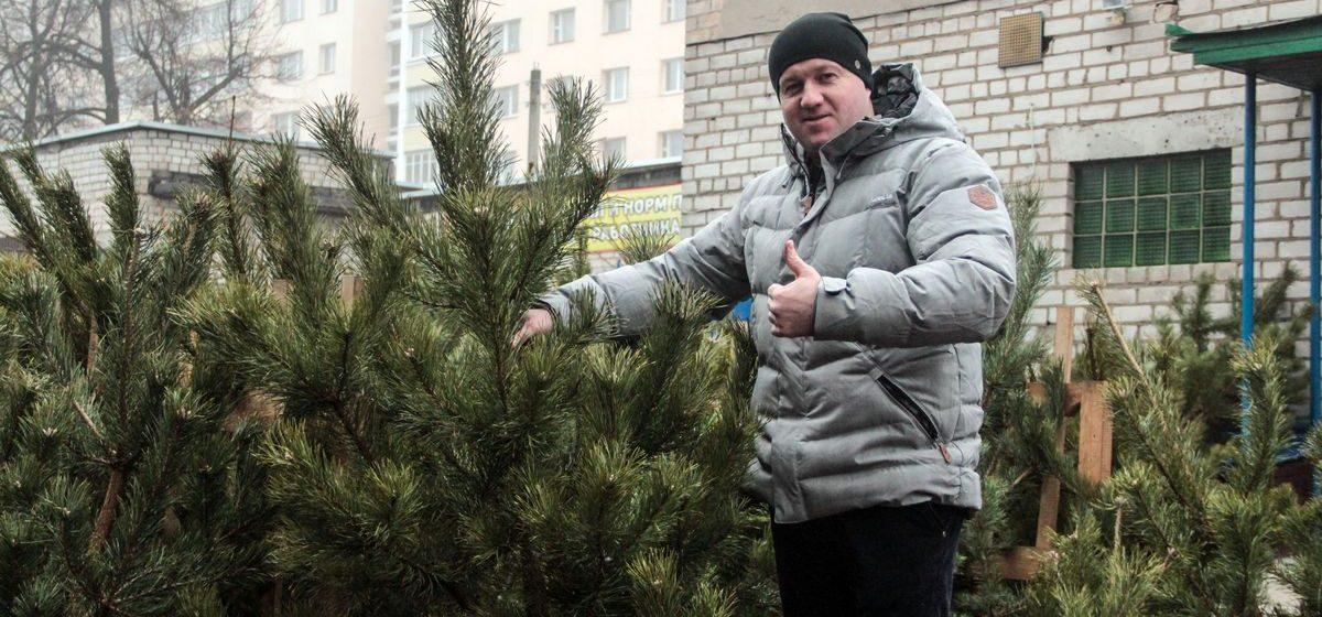 Где в Барановичах купить елку к Новому году? Карта елочных базаров