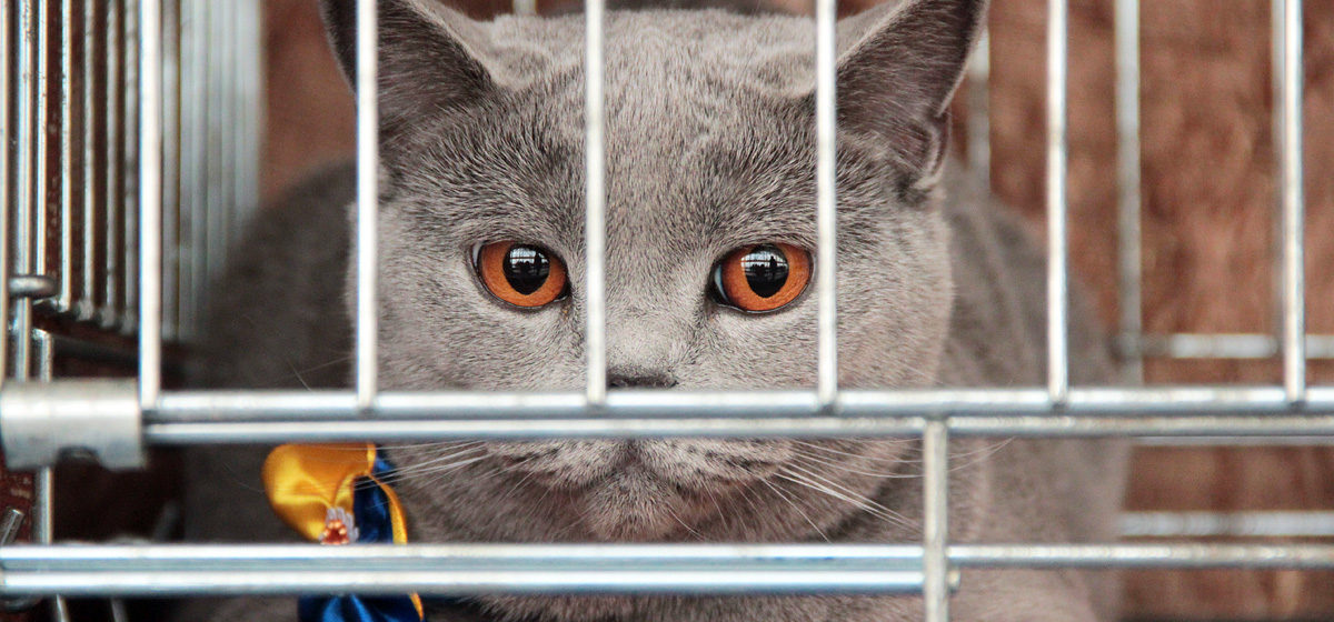 В Барановичах прошла выставка кошек
