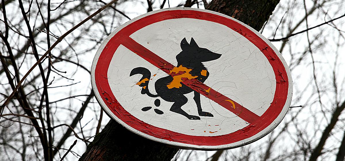 Барановичские собаководы и отдыхающие не могут поделить парк