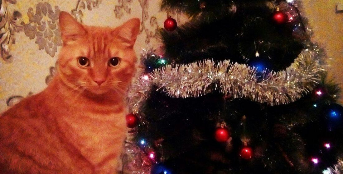 Подборка лучших барановичских новогодних елок
