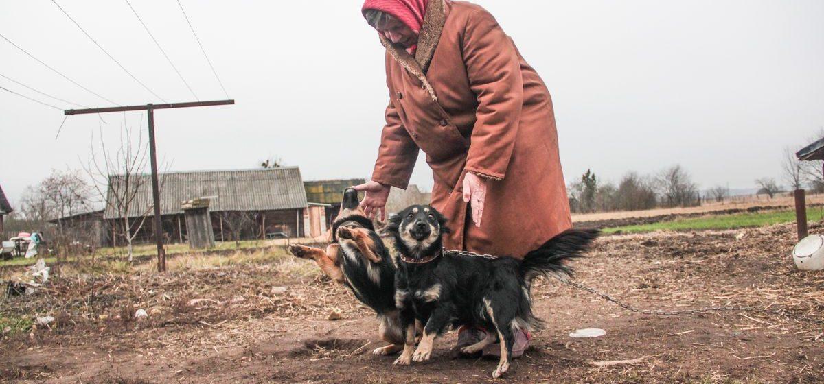 В Барановичском районе мужчина застрелил собаку на глазах у хозяйки
