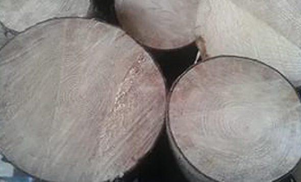 В Березовском районе из-за упавшего дерева погиб молодой мужчина