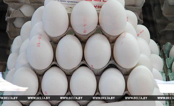 Барановичская птицефабрика планирует в сутки производить миллион яиц
