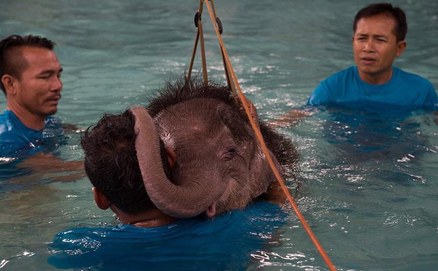 В тайском парке слоненка-инвалида заново учат ходить