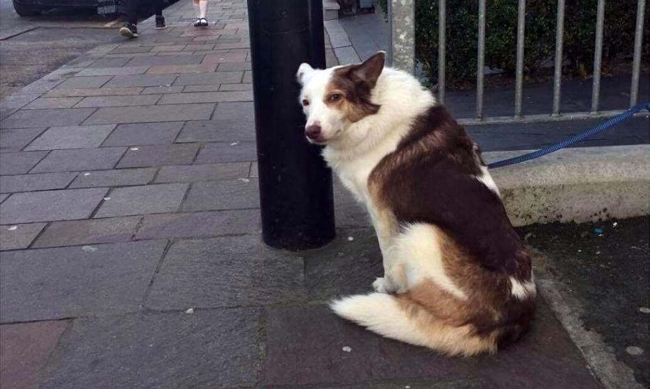 Ирландец коллекционирует фотографии грустных собак, которые ждут хозяев возле магазинов