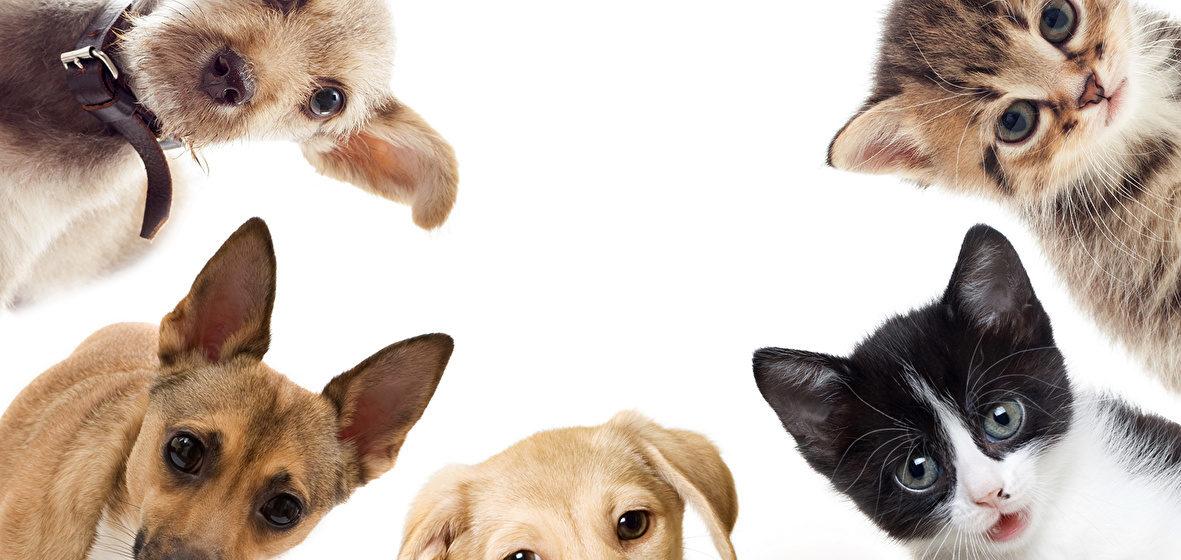 Животные, которые могут лечить человека
