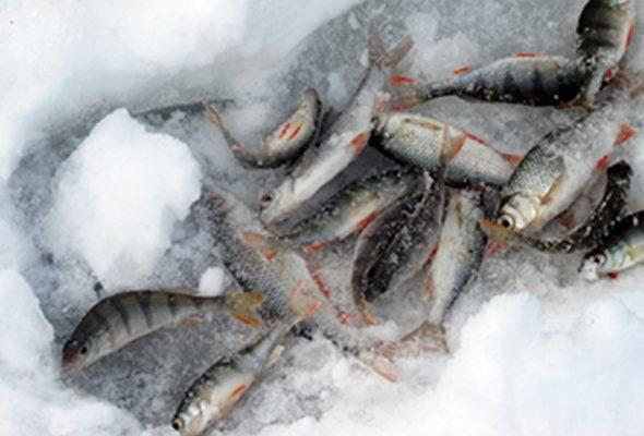 В Барановичском районе прошли соревнования по зимней рыбалке