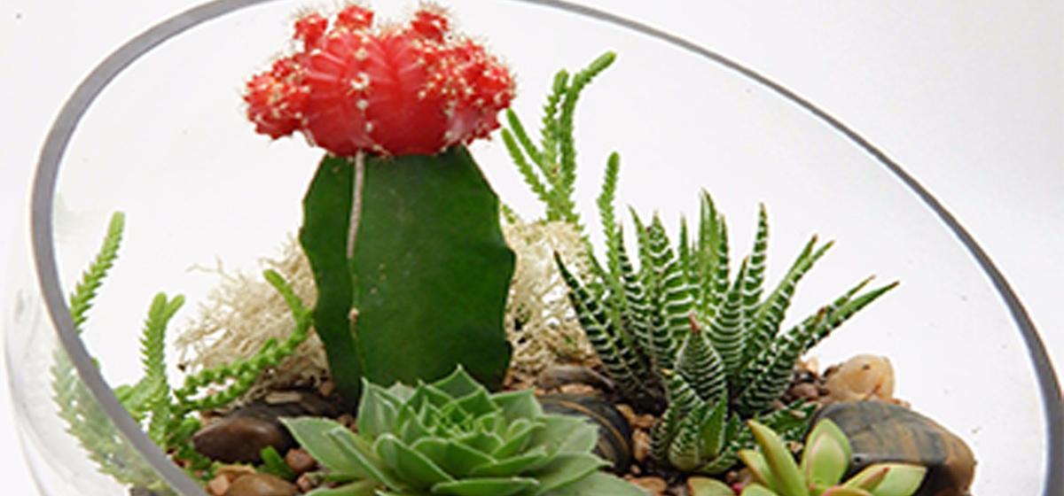 Комнатные растения для тех, кто ленится за ними ухаживать