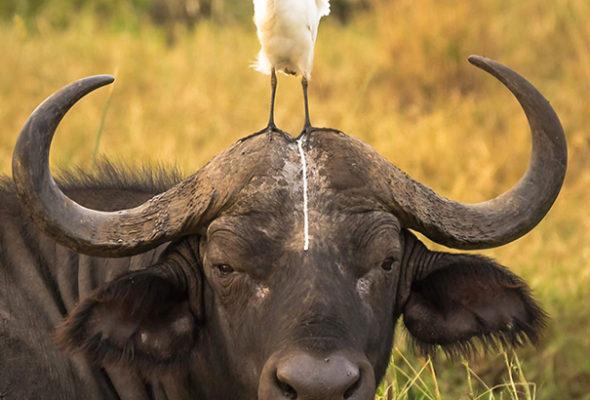 Подборка снимков смешных неудач, которые произошли с животными