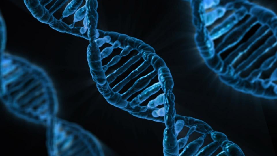 Ученые: Некоторые клетки человека живут после его смерти