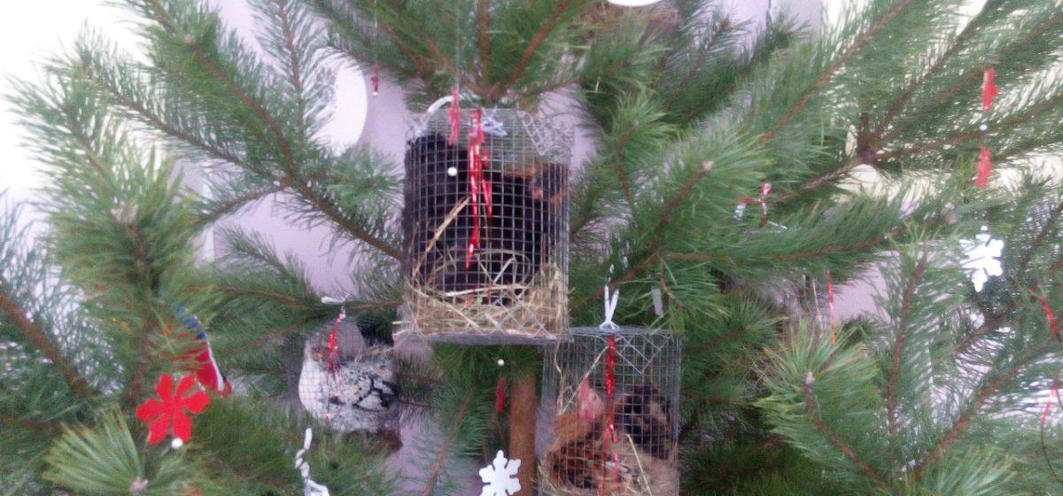 Фотофакт: В Гомеле школьную елку украсили живыми петухами
