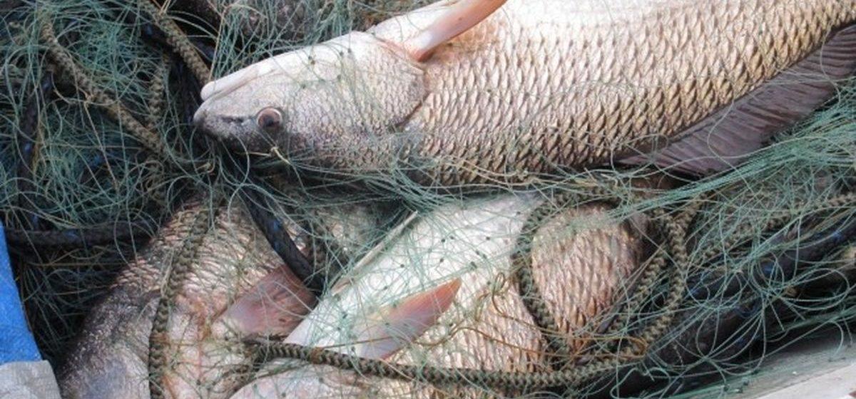 В Барановичах браконьеру за девять рыб придется заплатить штраф в 242 рубля