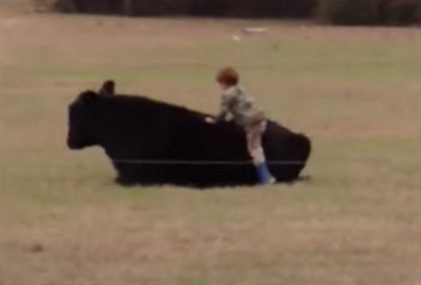 На YouTube появился видеоролик, как маленький мальчик запрыгнул на быка