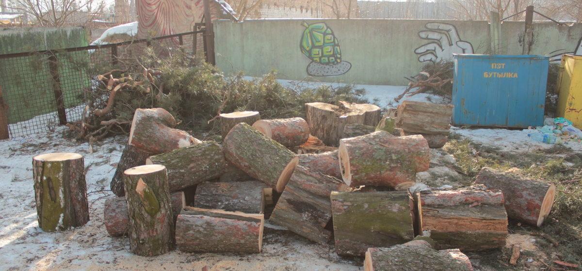 Почему в Барановичах в Военном городке срубили вековое дерево?