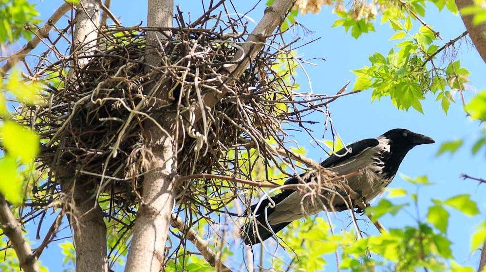 С 15 февраля в Беларуси запрещено уничтожать гнезда птиц