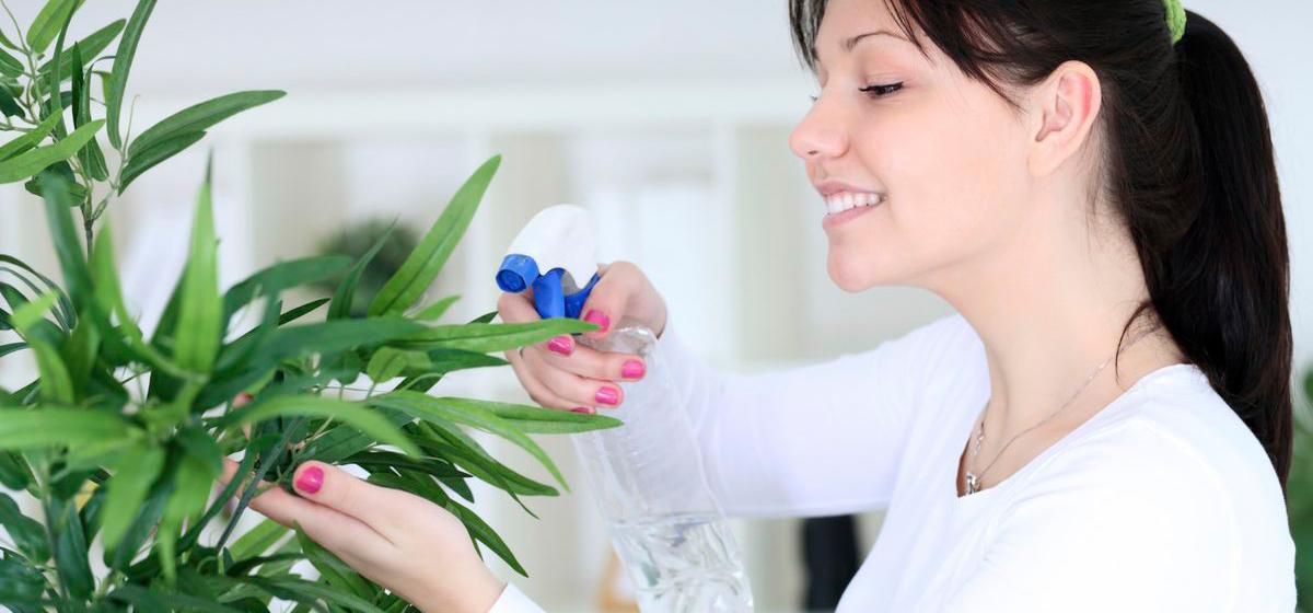 Как устроить «химчистку» для растений