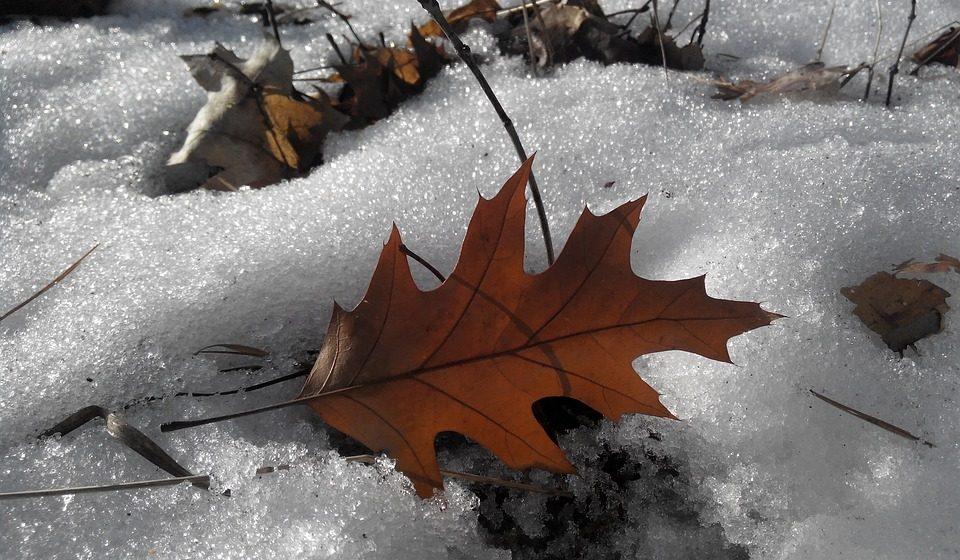 В ближайшие дни, 14–16 февраля, в Барановичах потеплеет