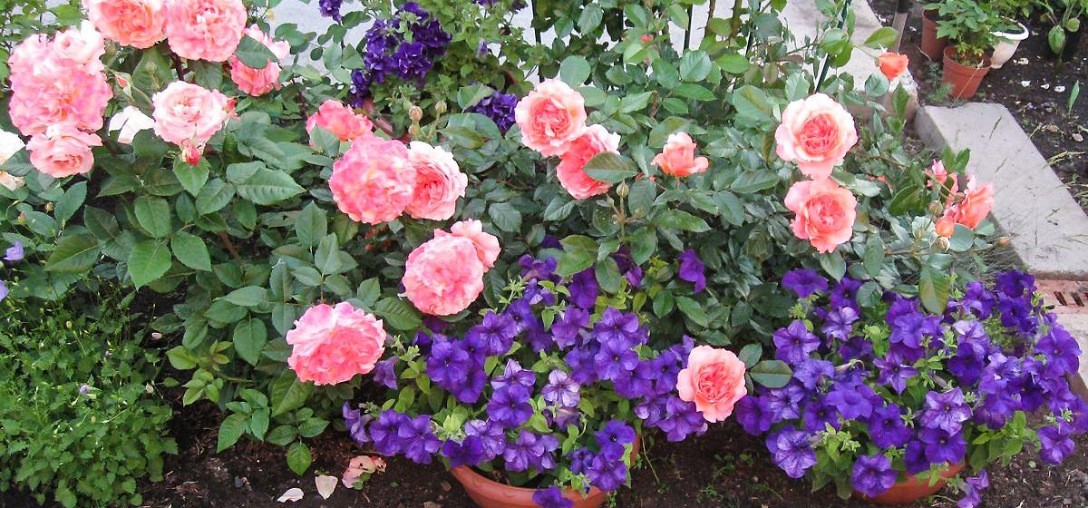 Какие цветы нужно успеть посеять в феврале?