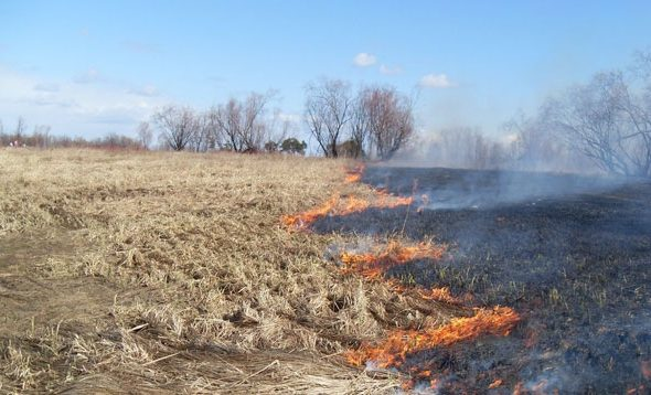 За выжигание сухой травы могут оштрафовать на 920 рублей