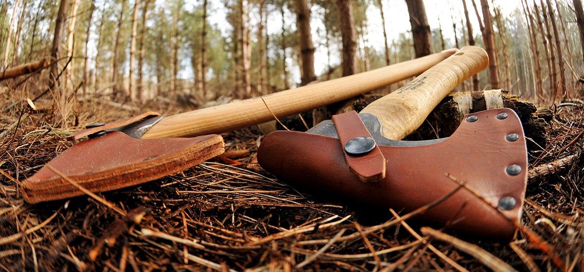 Житель Барановичей за незаконную вырубку деревьев может заплатить до 1150 рублей штрафа