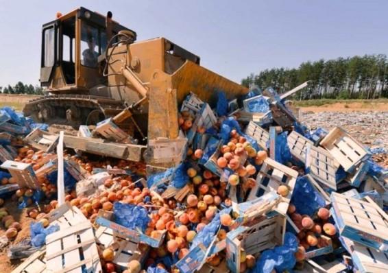 В России уничтожили 76 тонн продуктов из Беларуси