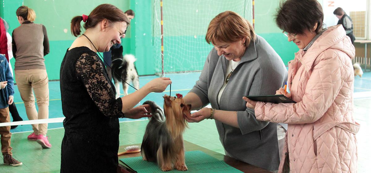 В Барановичах прошли выставки собак