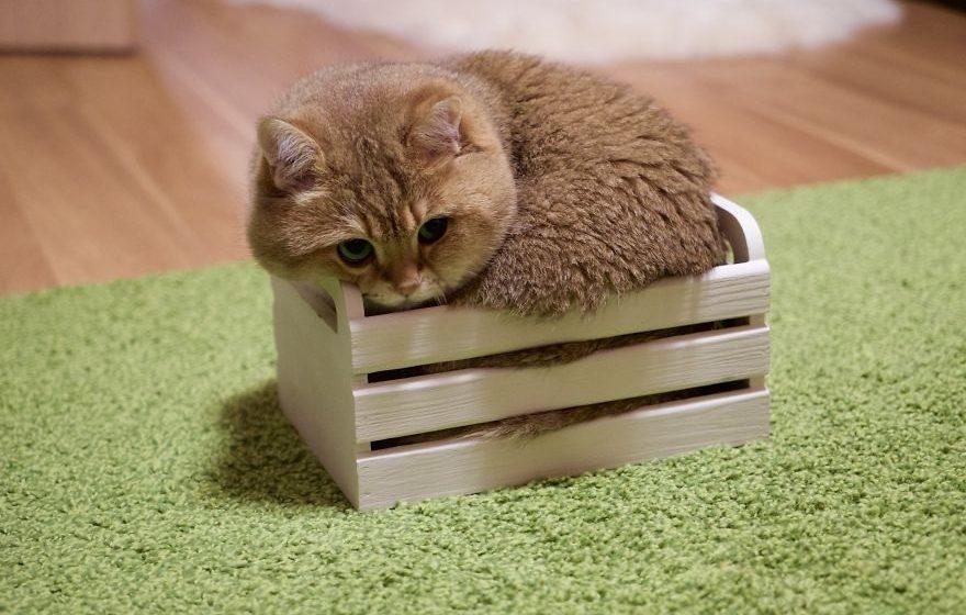 Подборка фотографий «мимимишного» кота, который покорил Instagram