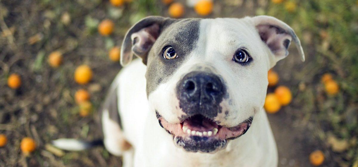 Пес, насмерть загрызший хозяина, в прошлом году спас ему жизнь