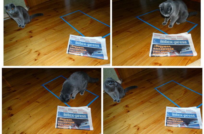 Пользователи соцсетей нашли «идеальную ловушку для кота»