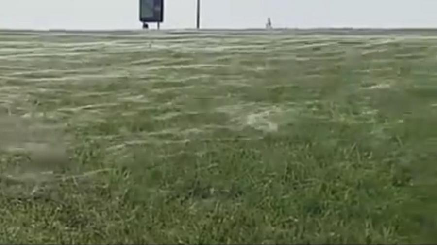 В Новой Зеландии местные жители сняли на видео, как пауки накрыли паутиной 30-метровое поле