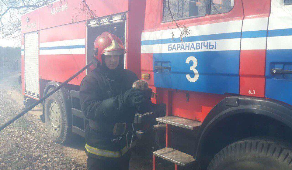 Барановичские пожарные спасли из огня ежика