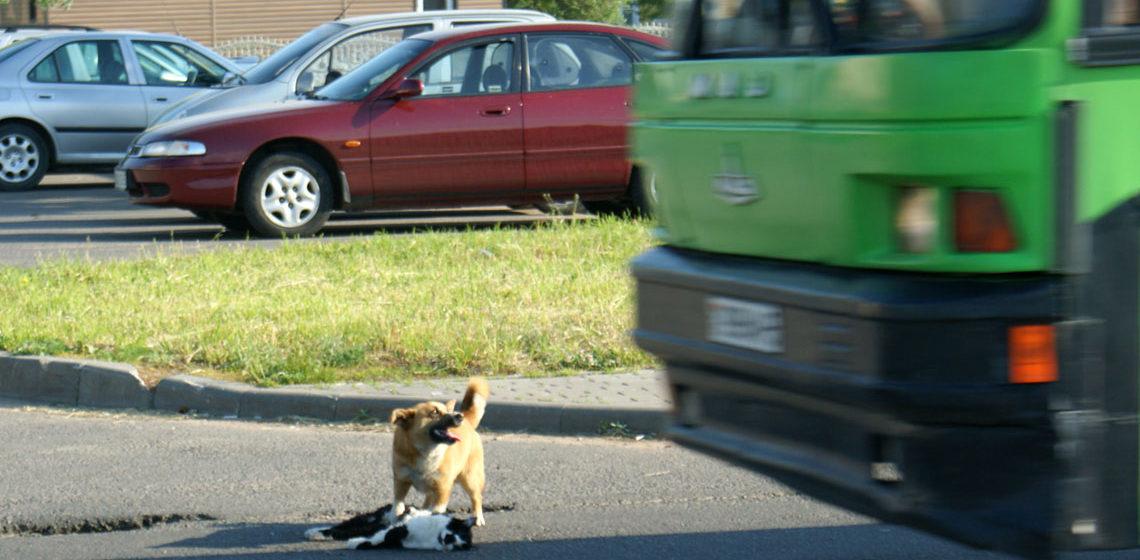 Фотофакт: в Слуцке собака пыталась спасти сбитого машиной кота