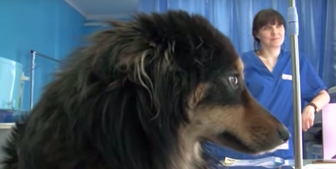 В Бресте кто-то сбросил с пятого этажа бездомную собаку