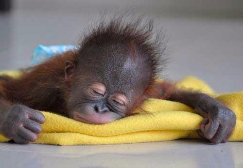 Ученые рассказали, какие сны снятся животным