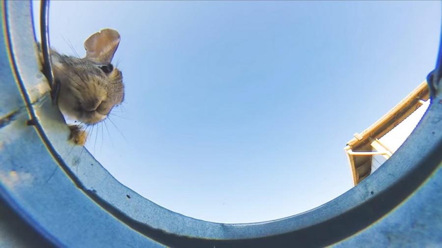 Видеоролик с ведром воды и пьющими из него животными набрал более 5,5 млн просмотров