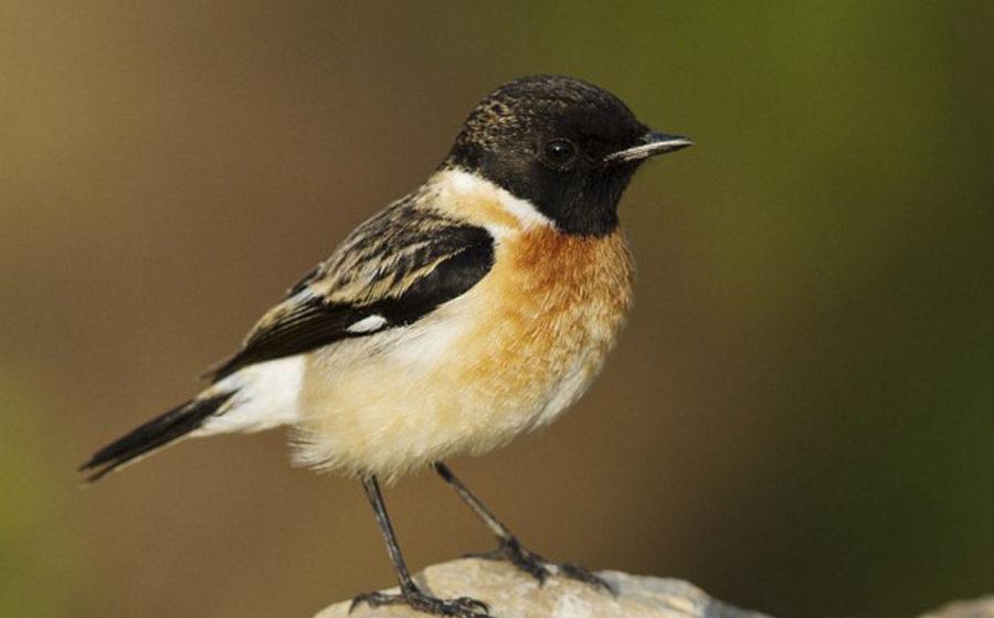 Новый вид птиц замечен в Беларуси