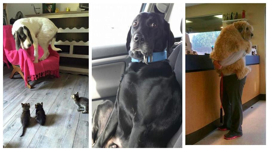 Подборка фотографий собак, которых напугали самые смешные вещи