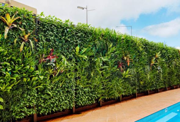 Варианты вертикального озеленения на даче