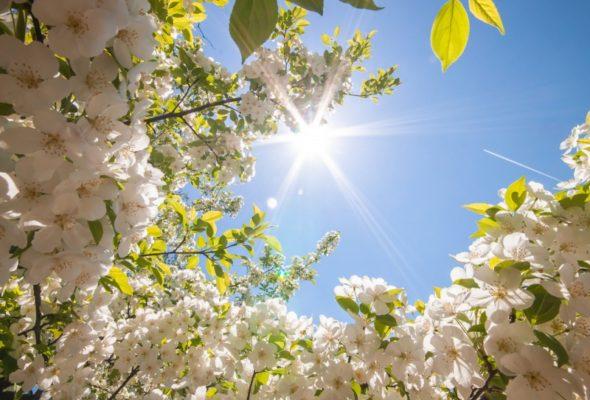 До 23 градусов тепла обещают синоптики на 15 мая
