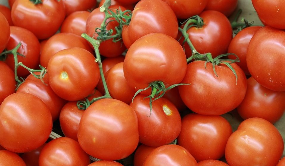 Беларусь стала главным покупателем турецких помидоров
